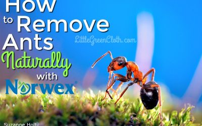 How to Naturally Remove Ants…with Norwex!!